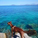 「オレの夏が始まってる」…余計なお世話と海とボン