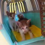 3匹の子猫とボンさんの年齢