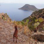島の裏へ!恐怖の崖っぷちロードで地中海に叫ぶ