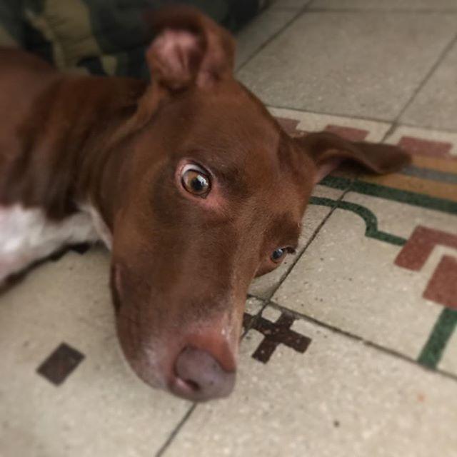 1週間ほど取材で不在にしてたら、このありさま目を合わせないように必死なボンさんww#ボン先輩 #雑種犬#元保護犬#いぬら部 #muttstagram #dogstagram #ilovemydog #拗ねるワンコもカワイイ️