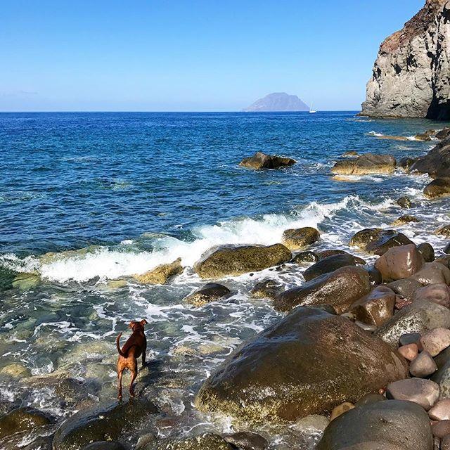 ボンを探せ?! シチリア色のボン。自然に同化しがちw。#ボン先輩 #あさんぽ #犬旅 #シチリア #エオリア諸島 #世界遺産 #sicilia #eolie #ilovemydog #muttstagram #dogstagram