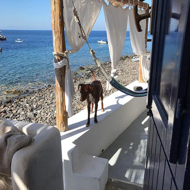 おはよう🌞Buongiorno#ボン先輩 #雑種犬 #元保護犬 #犬旅 #シチリア #エオリア諸島 #dogofinstagram #muttstagram #ilovemydog #sicilia #eolie