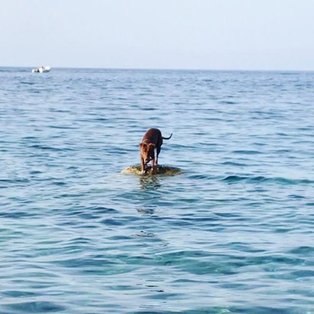 続き︎自力で無事生還! #ボン先輩 #飛び込みも覚えました #雑種犬 #元保護犬 #シチリア #エオリア諸島 #ilovemydog #dogofinstagram #eolie