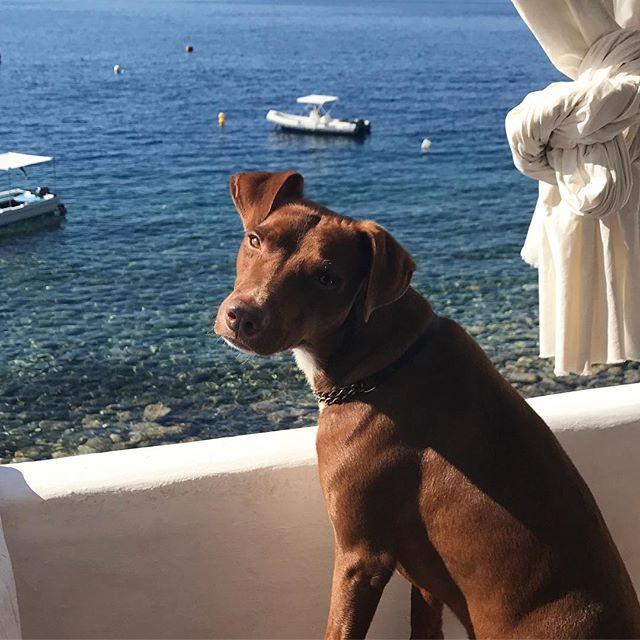 振り向いた顔が、ヤダ️イケメン#ボン先輩 #おはよう #雑種犬 #イケメン犬 #元保護犬 #犬旅 #エオリア諸島 #シチリア #ilovemydog #dogofinstagram #eolie