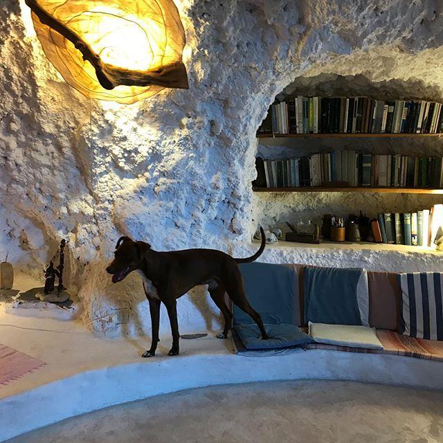 オレ、洞窟に泊まったよ!#ボン先輩 #雑種犬 #元保護犬 #エオリア諸島 #シチリア #犬旅 #ilovemydog #grotta #dogofinstagram #eolie