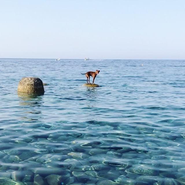 ボン先輩、ピーンチ!さあ、どうする?!To be continued... #ボン先輩 #雑種犬 #元保護犬 #困る犬 #犬旅 #シチリア #エオリア諸島 #ilovemydog #dogofinstagram #eolie
