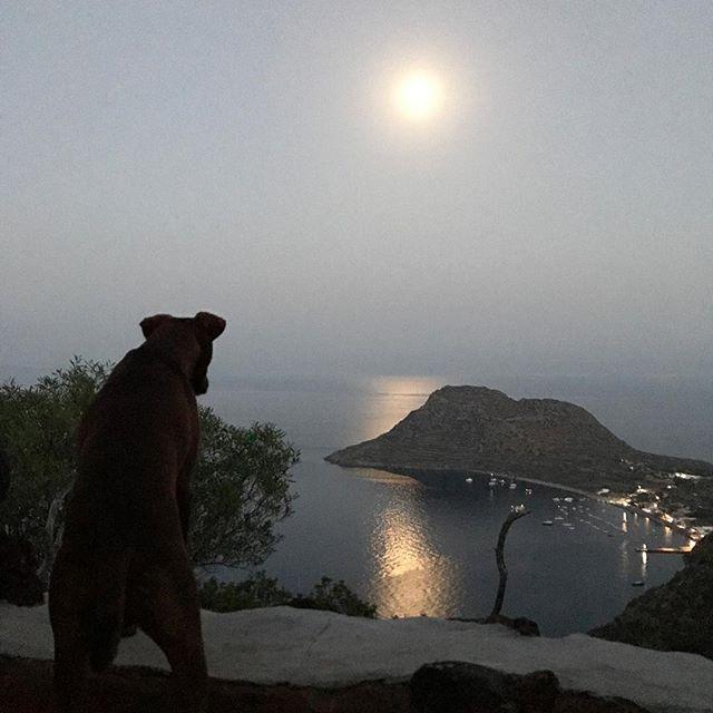 俺の月... #それは食べられません #ボン先輩 #雑種犬 #元保護犬 #犬旅 #月夜 #ilovemydog #dogofinstagram #eolie #sicilia #luna