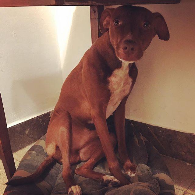 「オ、オレじゃないから」。2日連続でやらかしました...🙄。犬用ビスケット完食からの紙用ゴミ箱祭り。介護疲れのストレス発散か、あまり遊べてないから飽きてるのかも...人生に。*#ボン先輩 #不在中のイタズラ #反省中 #飼い主のギックリ腰回復中 #雑種犬 #元保護犬 #いぬら部 #ilovemydog #muttstagram #cane