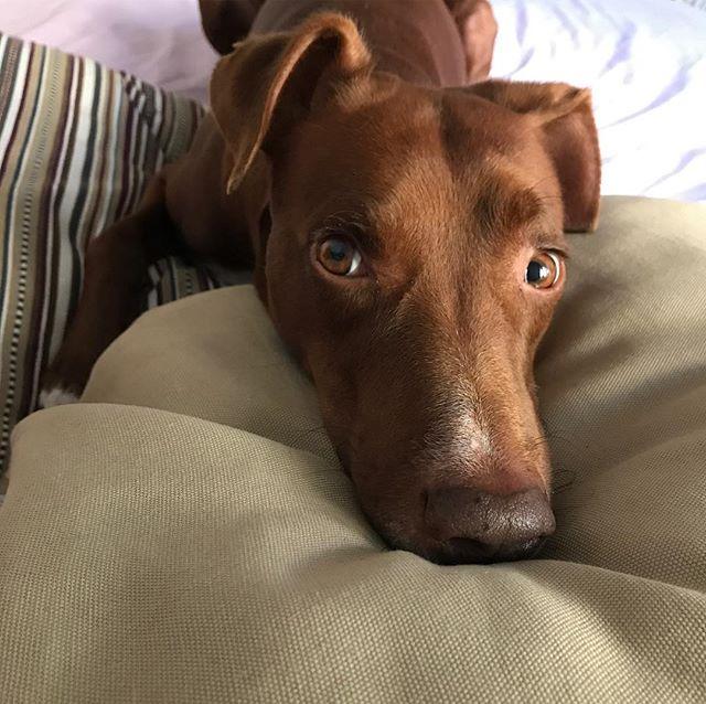 ずっと寄り添ってくれる看護師ボン*#ボン先輩 #飼い主 #ギックリ腰 #療養中 #いててて #雑種犬 #元保護犬 #詳しくはブログへ #ilovemydog #dogofinstagram #muttstagram #colpodellastrega #cane