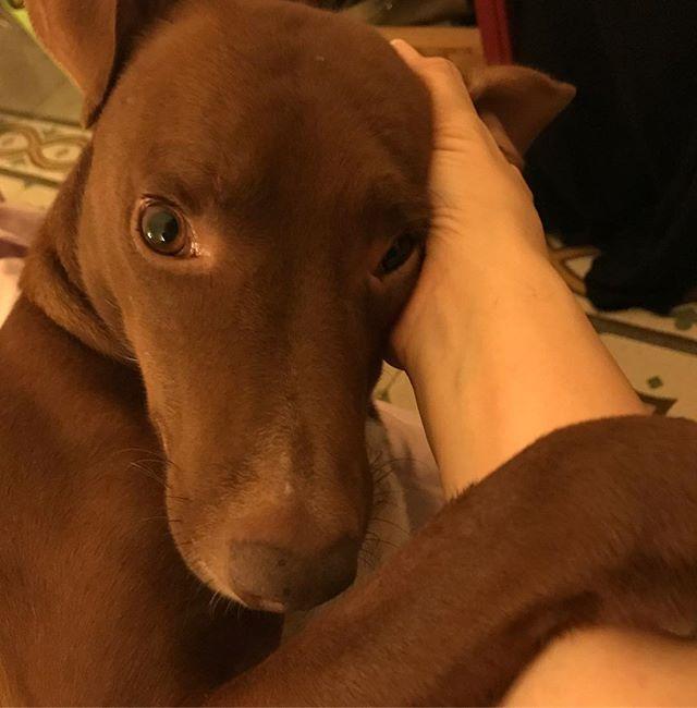 夜のイチャイチャタイム️を激写されてハッとするボンさん。*#ボン先輩 #耳をグルグルされるのが好き #雑種犬 #元保護犬 #いぬら部 #いぬばか部 #buonanotte #muttstagram #ilovemydog #cane
