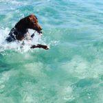 【動画】クリスタルの海と戯れるボン先輩♪