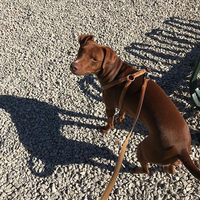 砂利が不快w#ボン先輩 #デリケートな一面もw #雑種犬 #元保護犬 #いぬら部 #ilovemydog #cane