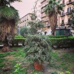 クリスマスツリーの末路…妄想の朝