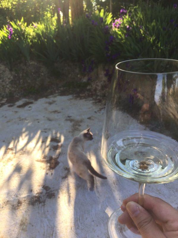 田園プランレポ:料理&ワインでリラックス
