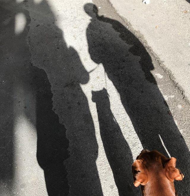 あさんぽ️passeggiata in tre. Come #silentmovie di #melbrooks 🤣#ボン先輩 #雑種犬 #保護犬 #保護犬出身 #メルブルックス #サイレントムービー #cane #ilovemydog