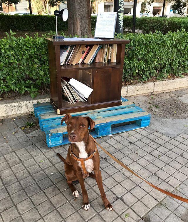 俺の広場に書斎作った人いますけど?🤣 che vuole fare sulla mia piazza?*#パレルモは今日も平常運転 #ミステリー #ボン先輩 #雑種犬 #保護犬 #保護犬出身 #cane #ilovemydog