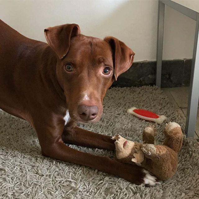 おはよう🌞ボンさん!今日は我が家の子になって6周年記念日ですよ🥂「モグラ、渡さない」あ、そう...。 #ボン先輩 #保護犬だからお誕生日不明 #我が家に来た今日が記念日 #満6歳 #奇しくも #猫の日 #おめでとう #6thanniversary #happyBonsday #auguri #cane #ilovemydog