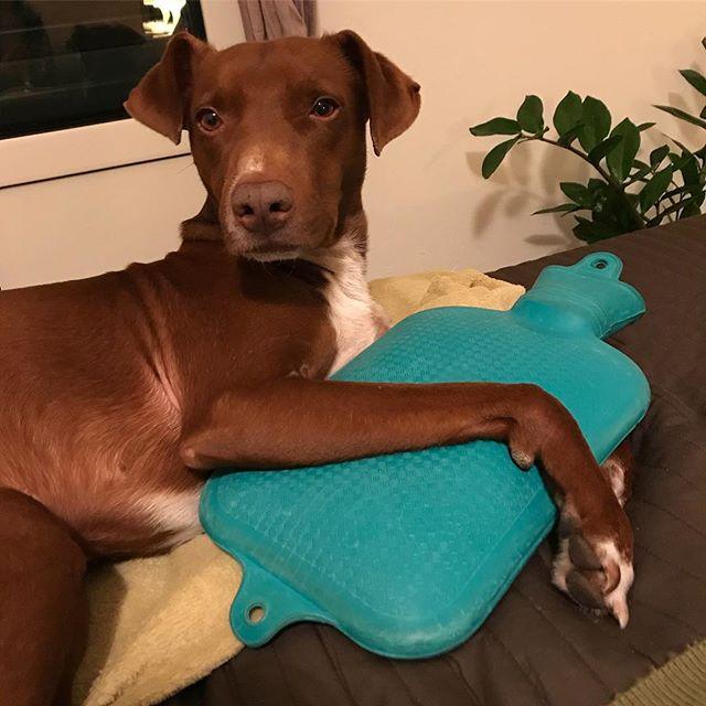俺、今日こいつと寝るから。Stasera, dormo con lei. *#腕枕 される #湯たんぽ #抱かれたい男ナンバーワン #ボン先輩 #雑種犬 #保護犬 #保護犬出身 #cane #ilovemydog #borsadacquacalda