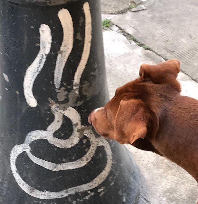 あれ?臭わない...?Non fa puzza???🤣🤣🤣🤣*#ボン先輩 それは #落書き ですよw #雑種犬 #保護犬 #保護犬出身 #あさんぽ #パレルモ #シチリア #cane #palermo #graffiti #ilovemydog