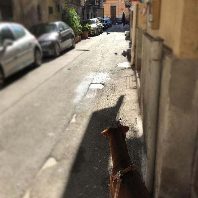 路地裏の主がいて通れない🤣!Ecco il padrone del vicolo! Non posso passare...*#ボン先輩 #猫 #苦手 #あさんぽ #結構弱気 #雑種犬 #保護犬 #保護犬出身 #パレルモ #シチリア #イタリア #路地裏 #cane #ilovemydog