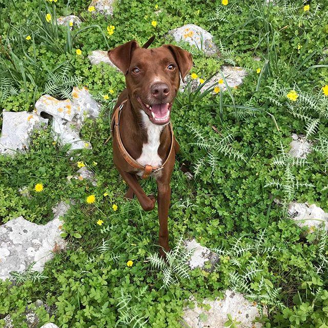 春だよ〜!#primavera *#ボン先輩 #あさんぽ #雑種犬 #保護犬 #パレルモ #シチリア #春 #cane #ilovemydog #palermo #montepellegrino