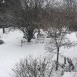 ピエモンテも積雪!雪遊びする勇気ある猫
