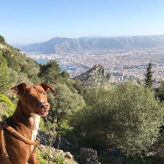 オレの街だぜ。I ️#palermo !*#ボン先輩 #雑種犬 #保護犬 #パレルモ #シチリア #イタリア #絶景 #sicilia #italia #siciliabedda #bellavista