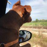 シチリアの風景を眺めながら…物思いに耽る犬