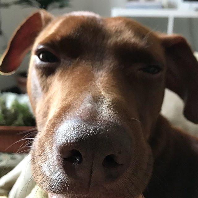 #おはよう🌞 #buongiorno *#ひさびさにのんびりの土曜日です♪ #ボン先輩 #雑種犬 #保護犬出身 #雑種犬同好会 #愛犬 #cane #ilovemydog