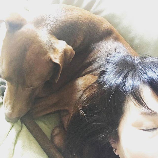 幸せ️ボン枕。Bonny cuscino ️*#おはよう #buongiorno #goodmorningworld #ボン先輩 #雑種犬 #雑種犬同好会 #元保護犬 #愛犬 #いぬのいる暮らし #cane #ilovemydog