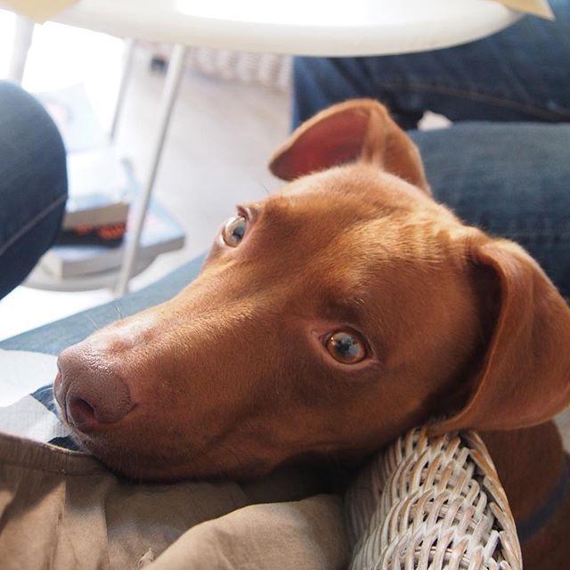 お利口さんBravo cian♪#ボン先輩 #お店では大人しい #ランチ #雑種犬 #元保護犬 #愛犬 #犬 #cane #ilovemydog #buonpranzo