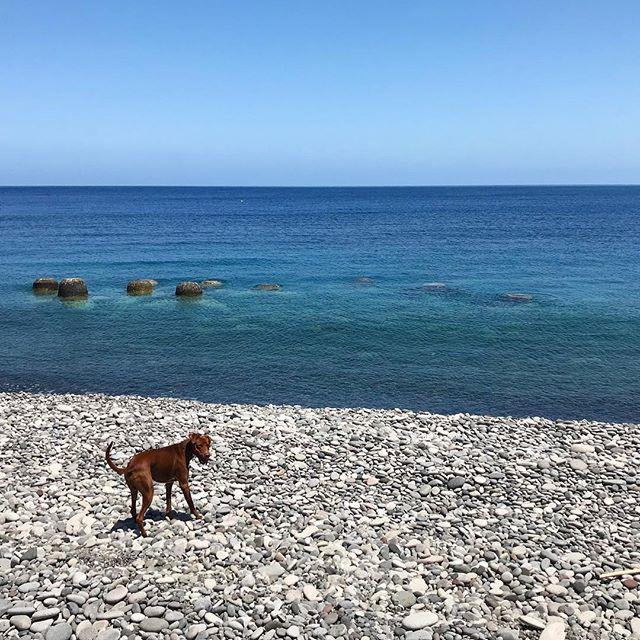 イヤッホゥ♪ Yeah!#ボン先輩 #海 #大好き #雑種犬 #雑種犬大好き #元保護犬 #保護犬応援 #シチリア #エオリエ #犬旅 #フィリクーディ島 #バカンス #詳しくはブログへ #sicilia #filicudi