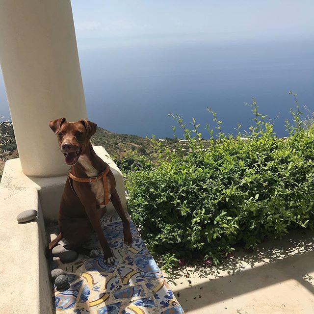 地中海と俺。みなさん、地震大丈夫でしたか?#おはよう #ボン先輩 #海 #雑種犬 #雑種犬大好き #元保護犬 #保護犬応援 #シチリア #エオリエ #犬旅 #フィリクーディ島 #バカンス #詳しくはブログへ #sicilia #filicudi #buongiorno #siciliabedda