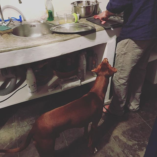 そのマグロ、ください。Mi dai un pezzo.#バカンスの家で #ボン先輩 #ください攻撃 #マグロ #雑種犬 #雑種犬大好き #元保護犬 #保護犬応援 #シチリア #エオリエ #犬旅 #フィリクーディ島 #バカンス #詳しくはブログへ #sicilia #filicudi #tonno