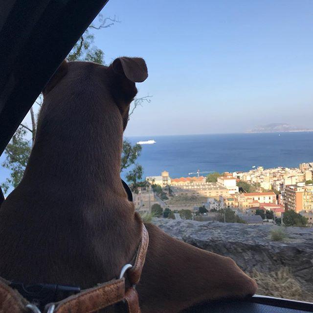 俺は海に行きたいんだ。#ボン先輩 #怒涛の日々 を終え#リラックス #パレルモ #モンテペッレグリーノ #シチリア #海 #雑種犬 #元保護犬 #犬とドライブ #palermo #montepellegrino #sicilia #cane #ilovemydog