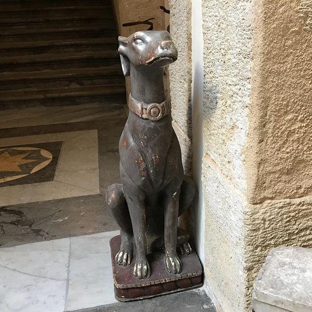 石ボンw。Bon cian versione in pietra.#ボン先輩 #石化 #雑種犬 #元保護犬 #パレルモ #シチリア #palazzodrago #palermo #sicilia #cane #scultura #ilovemydog