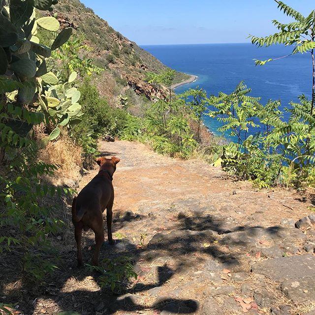 日蔭があって良かったワンUna pausetta all'ombra.#ボン先輩 #あさんぽ #雑種犬 #元保護犬 #犬と旅行 #シチリア #エオリア諸島 #フィリクーディ島 #詳しくはブログで #俺の夏休み2018 #cane #sicilia #siciliabedda #eolie #filicudi @la_vacanza_italiana