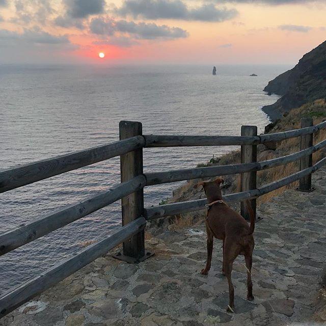 「夕日、すげー🤩!」と感動する#ボン先輩#夕日 #日没 #水平線 #雑種犬 #元保護犬 #犬と旅行 #シチリア #エオリア諸島 #フィリクーディ島 #俺の夏休み2018 #詳しくはブログで #filicudi #eolie #sicilia #siciliabedda #tramonto