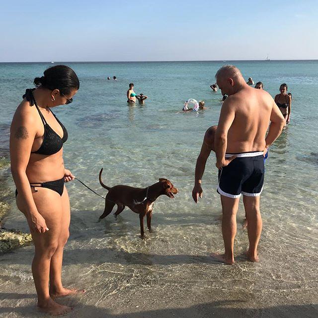また知らない人に懐いてるwUn cane socievole...#ボン先輩 #連れてる女性は友人ですから #雑種犬 #雑種犬大好き #保護犬を飼おう #保護犬出身 #保護犬 #犬と海 #シチリア #詳しくはブログで #sicilia #cane #ilovemydog