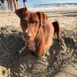 【ボン動画】夏の砂浜に埋まるボン