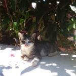 ボンやりボン先輩 VS 島の猫たち