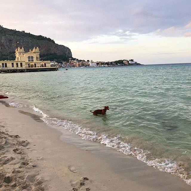俺の夏が終わる...La mia estate se ne sta andando...#ボン先輩 #寒くてこれ以上は無理w #夏の終わりに #最後の海 #雑種犬 #雑種犬大好き #保護犬出身 #保護犬を飼おう #いぬすたぐらむ #シチリア #詳しくはブログで #sicilia #cane #dogstagram