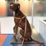 俺、(おやつもらう)準備万端!ー犬のリーシュマニア症検査