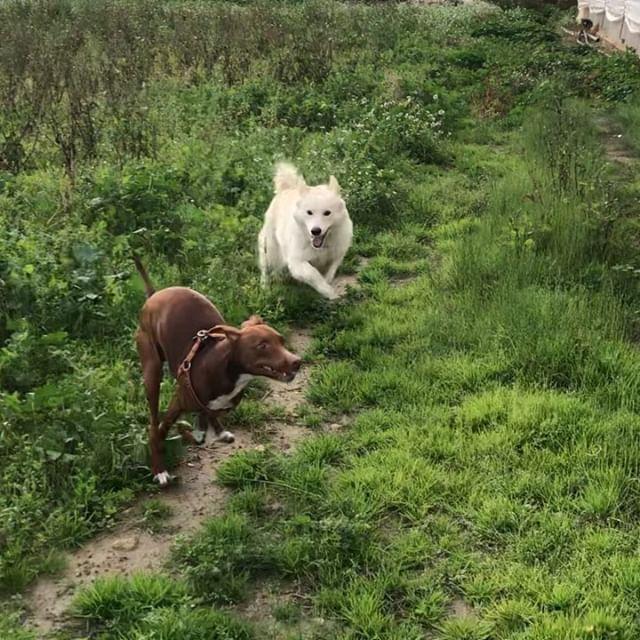 高速ボン#ボン先輩 #遊ぶ犬 #仲良し 全員#保護犬 #保護犬を家族に #雑種犬 #雑種犬大好き #いぬすたぐらむ #犬動画 #イタリア犬 #イタリア #シチリア #cane #canestagram #dogstagram #ilovemydog #amici