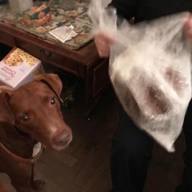 """なんなんすか?これ。毎年、バンバンやって怖いんですけど...。Ma che cos'è? Questo rumore """"ban ban""""...mi fa sentire paura...ogni anno.#ボン先輩 #パンドーロ #音が怖い #イタリア #クリスマス菓子 #伝統菓子 #雑種犬 #雑種犬同好会 #元保護犬 #保護犬を家族に #イタリア犬 #cane #canestagram #ilovemydog #pandoro"""