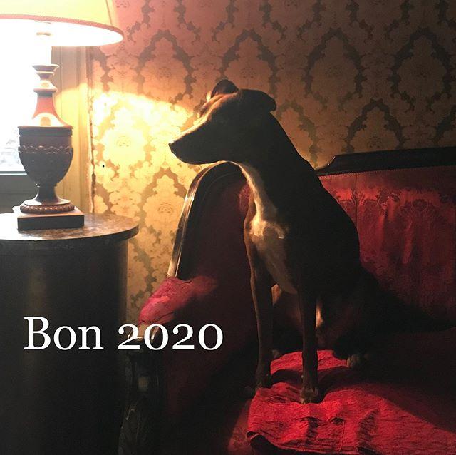 明けましておめでとうございます今年もどうぞよろしくお願いします!#ゴッドファーザー な俺#マーロンブランド のふりする#ボン先輩 は今年もご機嫌♪#元旦 #2020 #あけおめ #auguri #buonanno #feliceannonuovo #雑種犬 #元保護犬 #イタリア犬#パレルモ #シチリア #海外生活#ilovemydog #canestagram